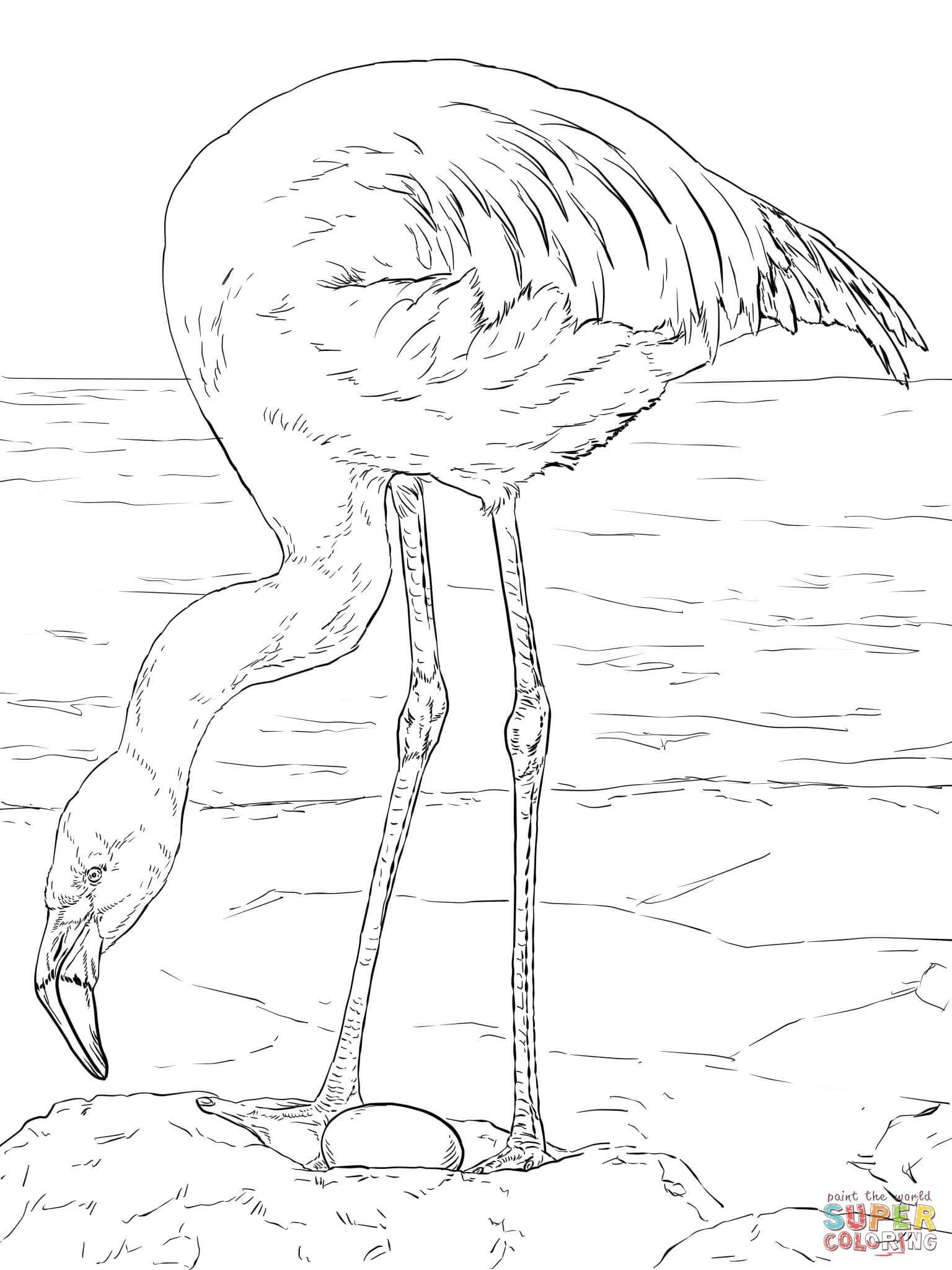 Chilean Flamingo coloring #9, Download drawings
