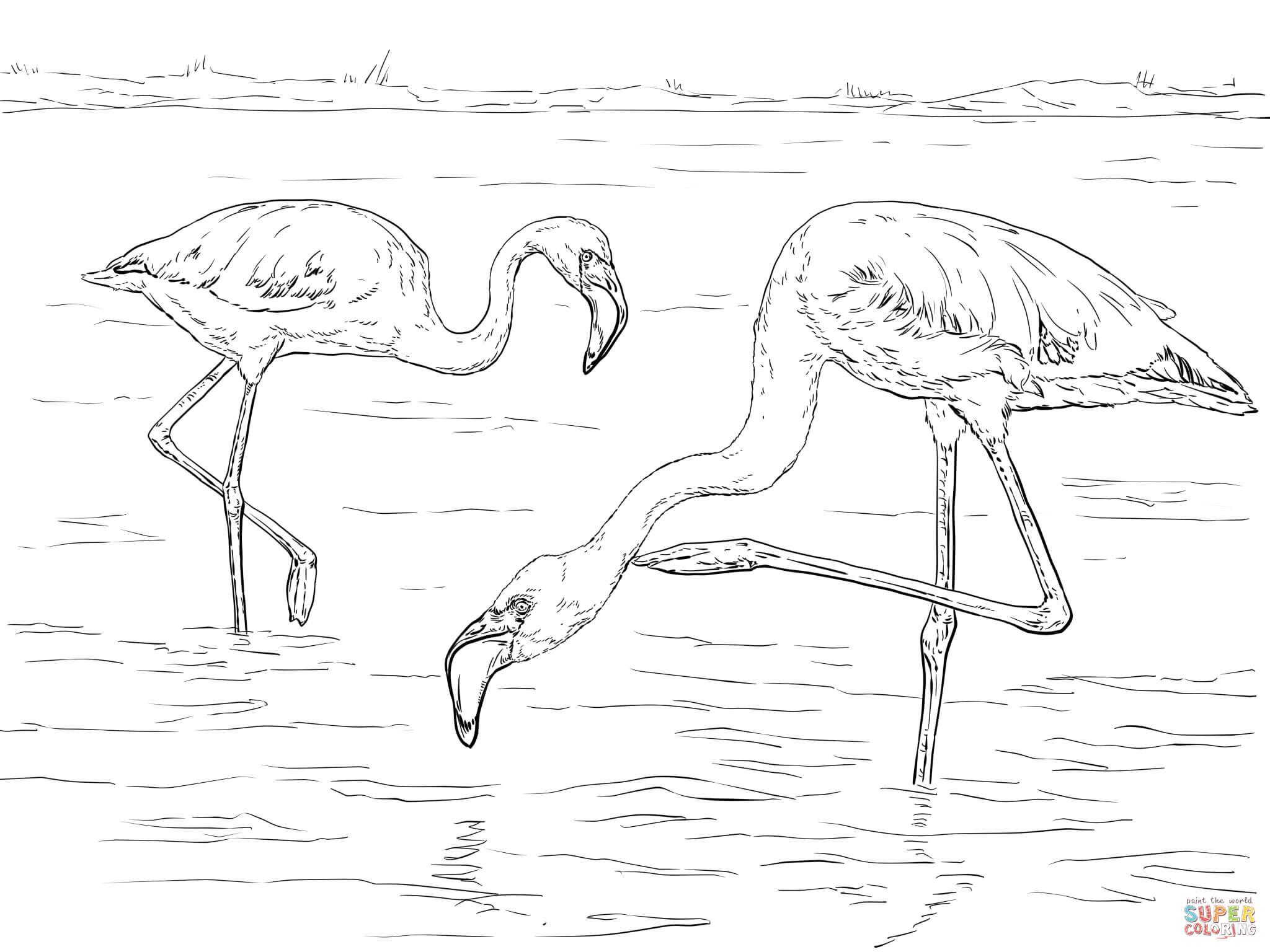 Chilean Flamingo coloring #4, Download drawings