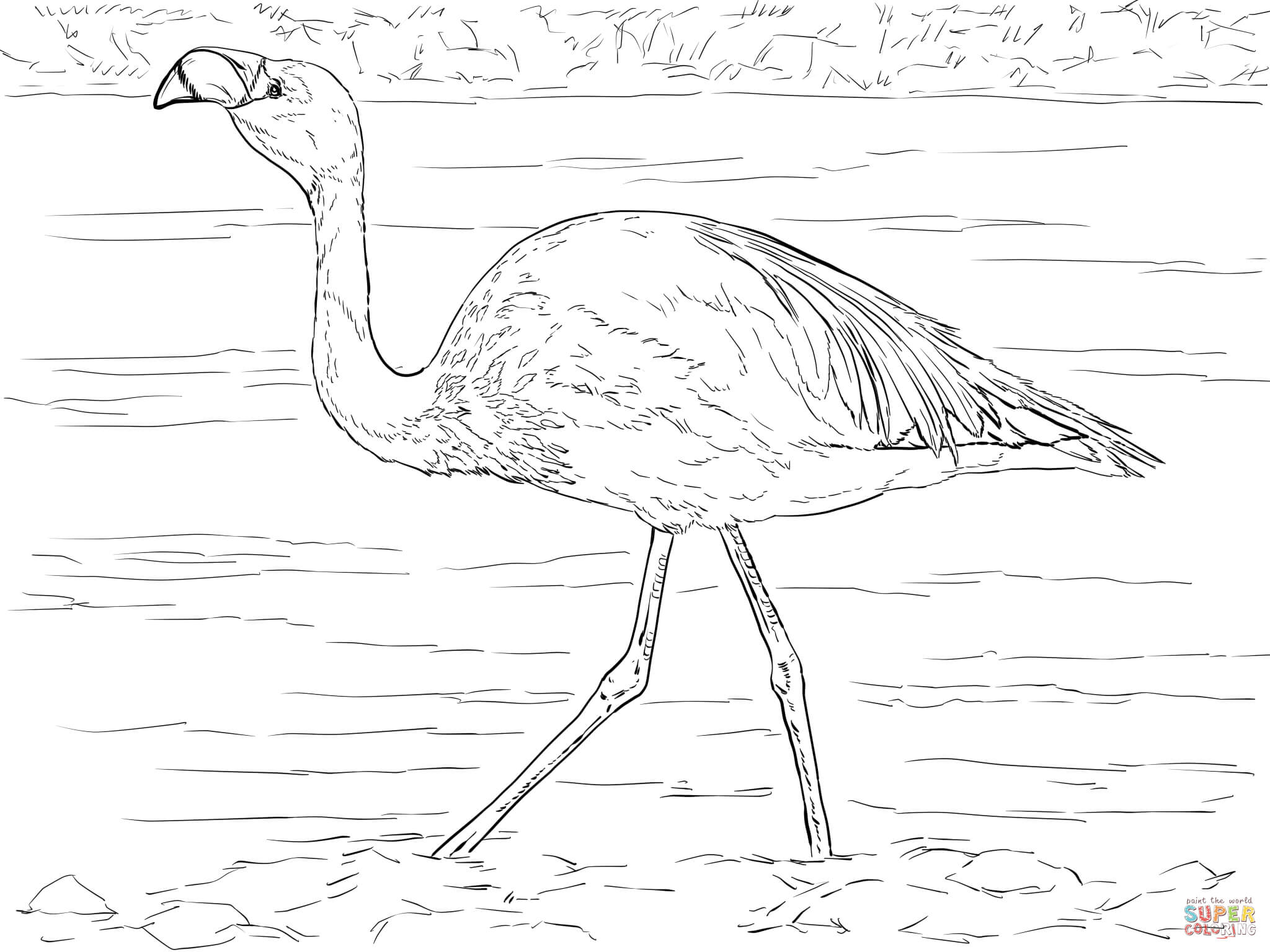 Chilean Flamingo coloring #6, Download drawings