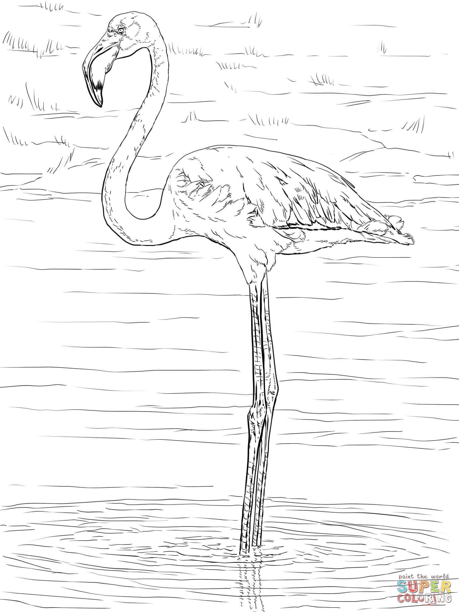 Chilean Flamingo coloring #5, Download drawings