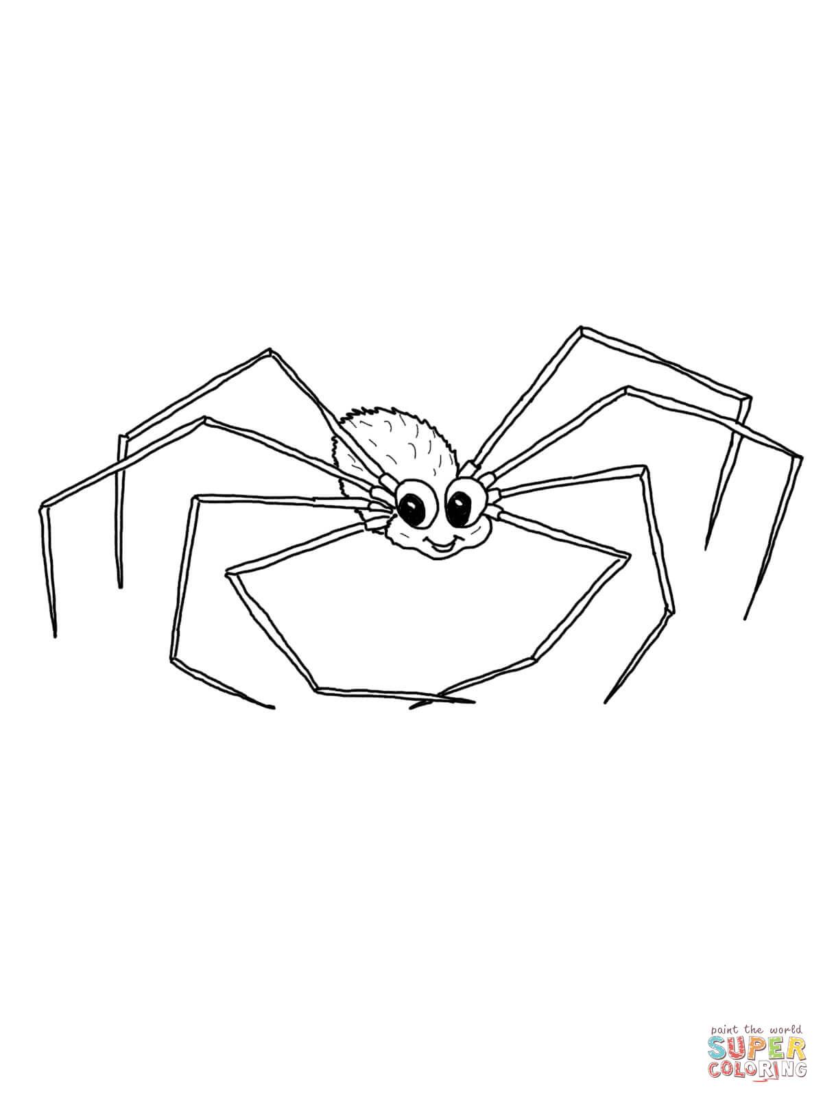 Chilean Rose Tarantula coloring #19, Download drawings