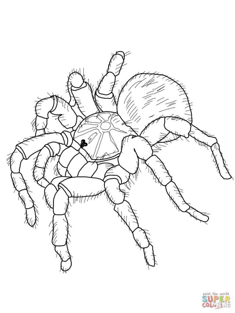 Chilean Rose Tarantula coloring #17, Download drawings