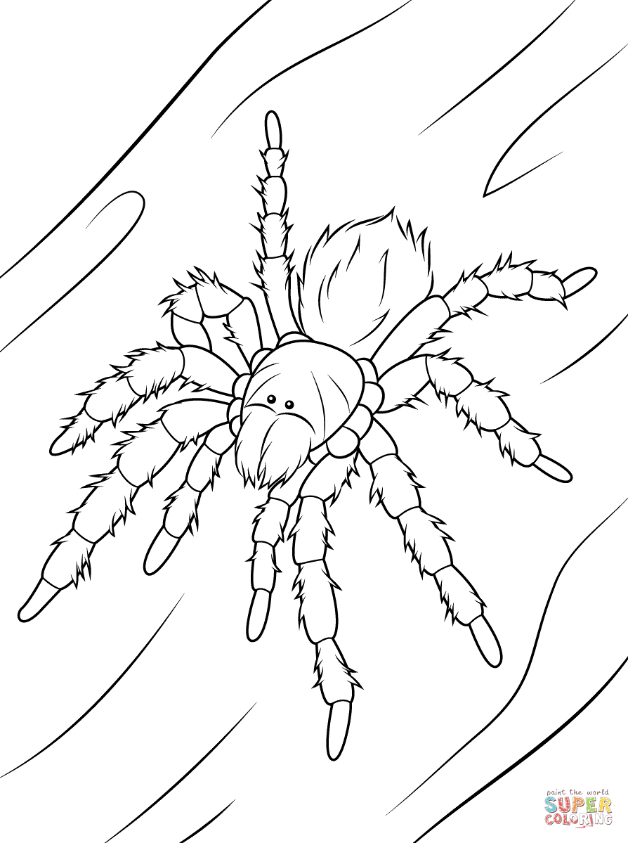 Chilean Rose Tarantula coloring #11, Download drawings