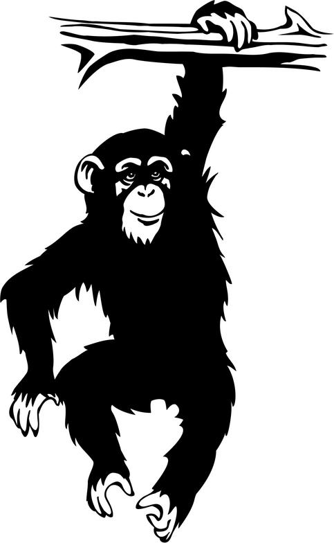 Chimpanzee clipart #5, Download drawings