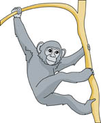 Chimpanzee clipart #15, Download drawings