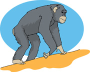 Chimpanzee clipart #12, Download drawings