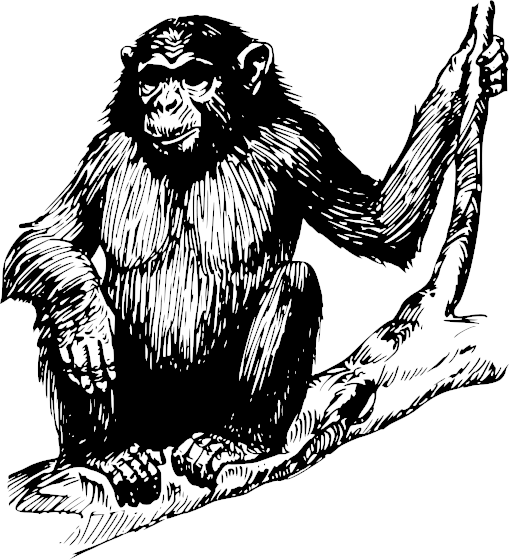 Chimpanzee clipart #4, Download drawings