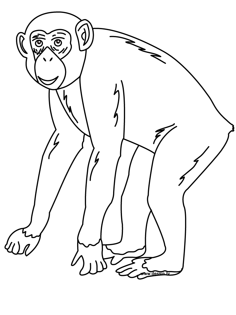 Chimpanzee coloring #7, Download drawings