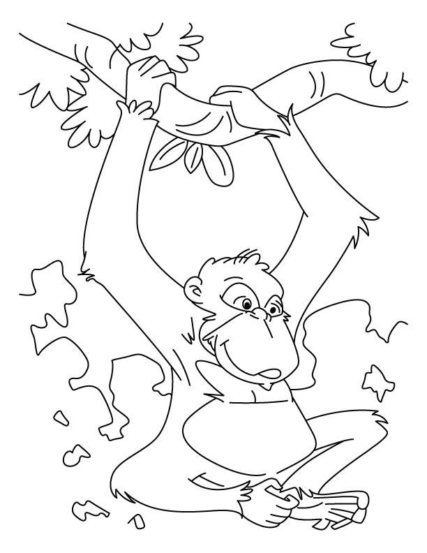 Chimpanzee coloring #15, Download drawings
