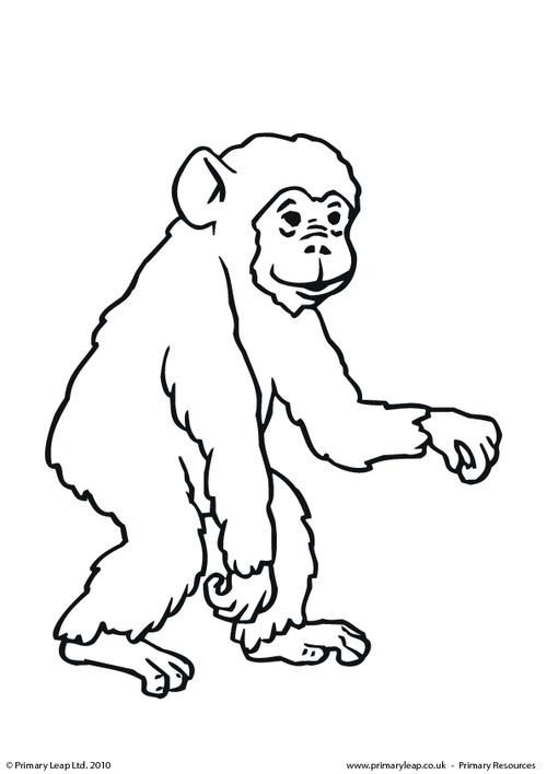 Chimpanzee coloring #10, Download drawings
