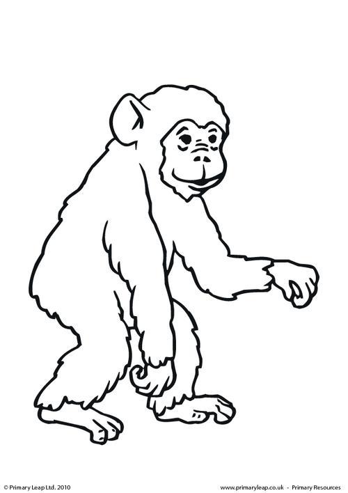Chimpanzee coloring #10, Download drawings