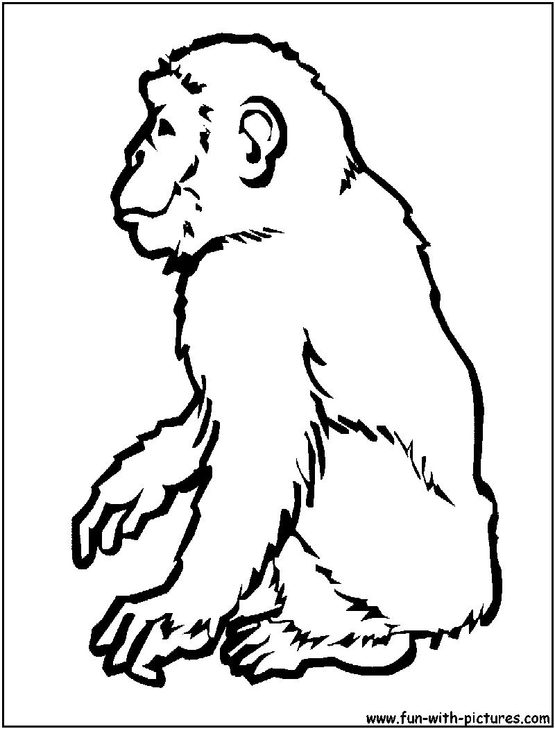 Chimpanzee coloring #8, Download drawings