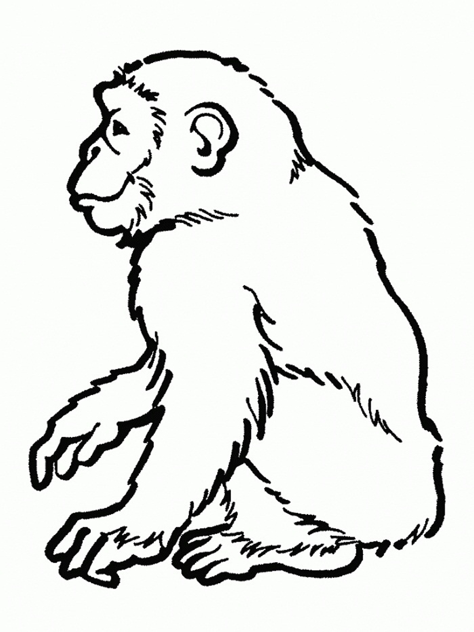 Chimpanzee coloring #19, Download drawings
