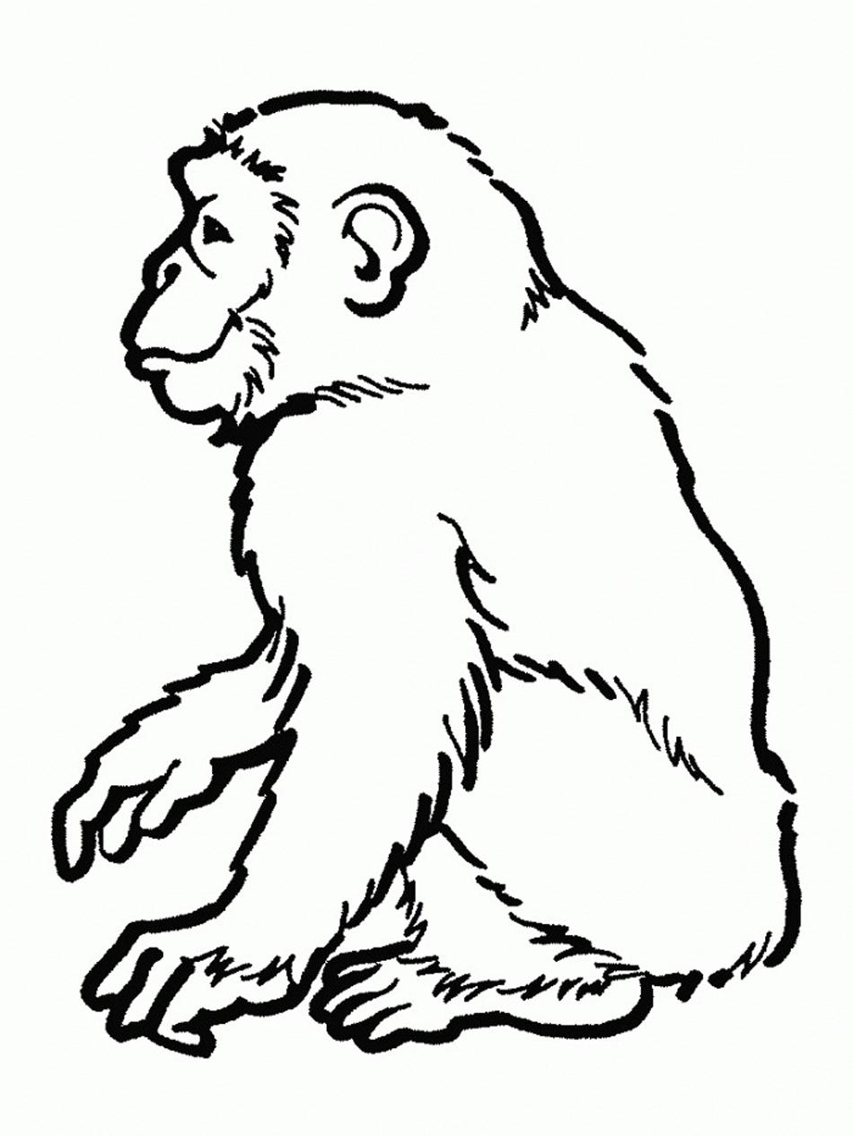 Chimpanzee coloring #19, Download drawings