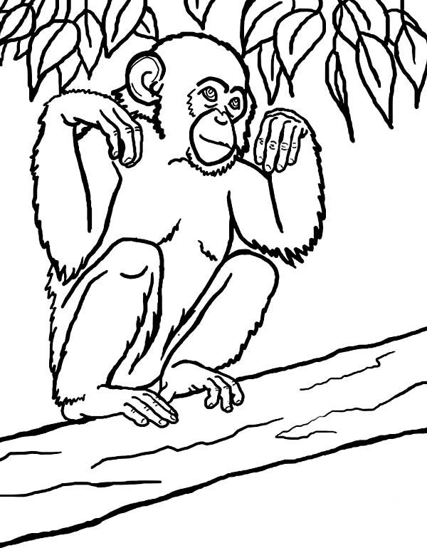 Chimpanzee coloring #14, Download drawings