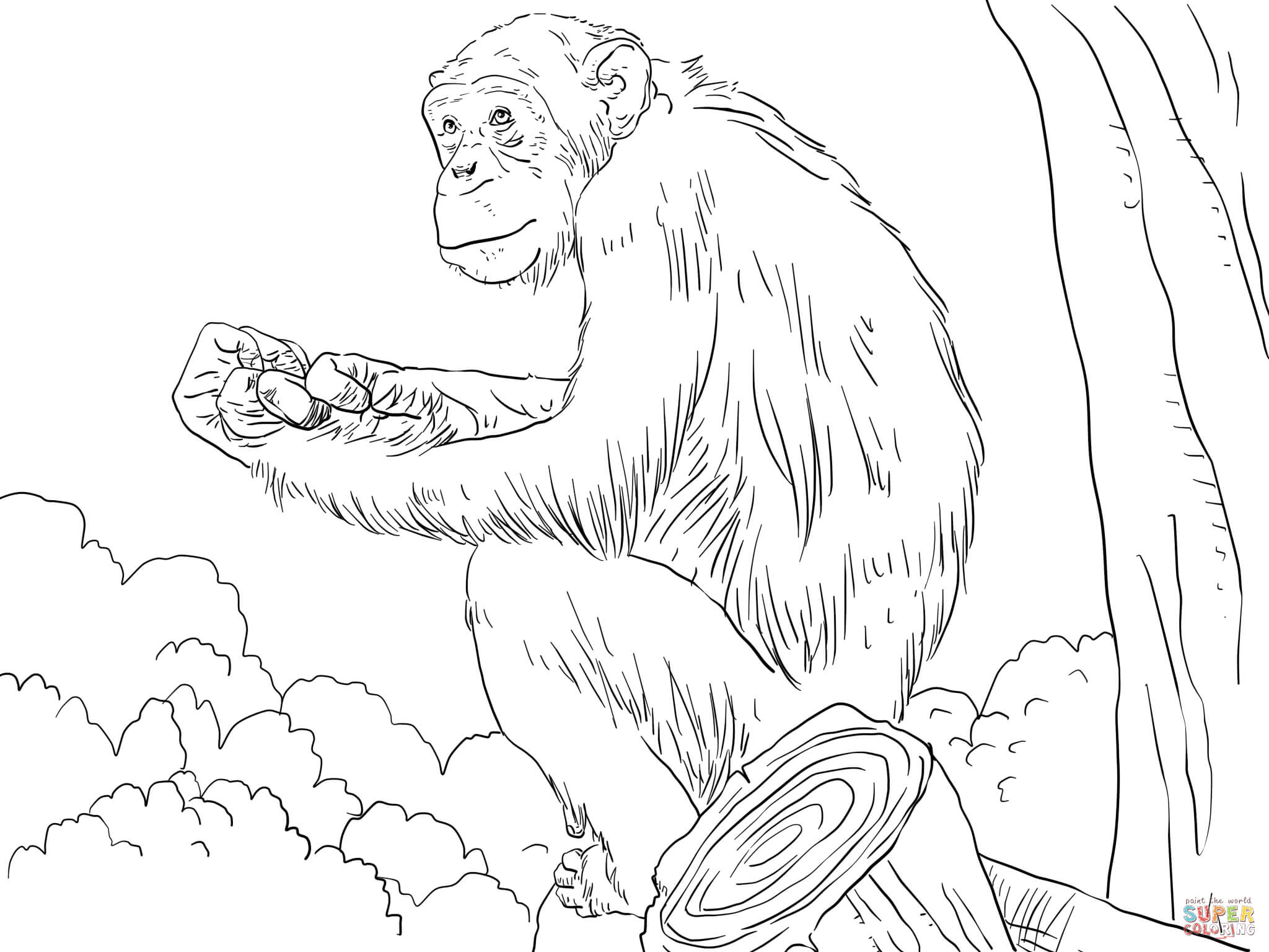 Chimpanzee coloring #3, Download drawings