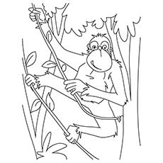 Chimpanzee coloring #5, Download drawings