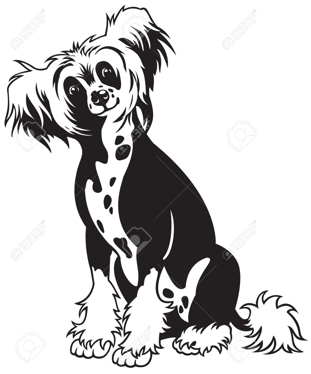 Chinese Crested Dog clipart #20, Download drawings