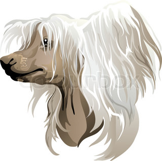 Chinese Crested Dog clipart #3, Download drawings