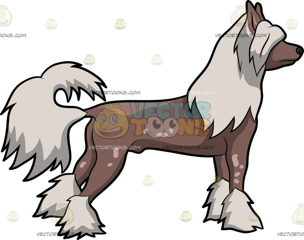 Chinese Crested Dog clipart #11, Download drawings