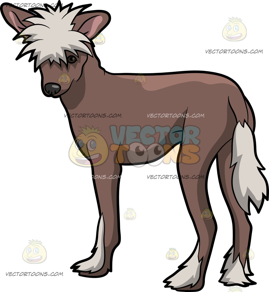 Chinese Crested Dog clipart #4, Download drawings