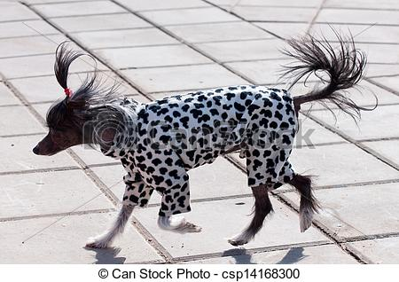 Chinese Crested Dog clipart #5, Download drawings