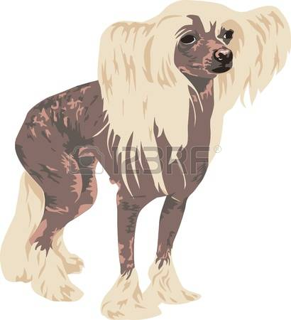 Chinese Crested Dog clipart #16, Download drawings