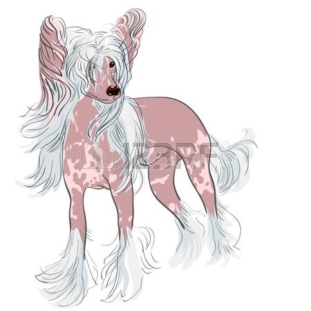 Chinese Crested Dog clipart #15, Download drawings