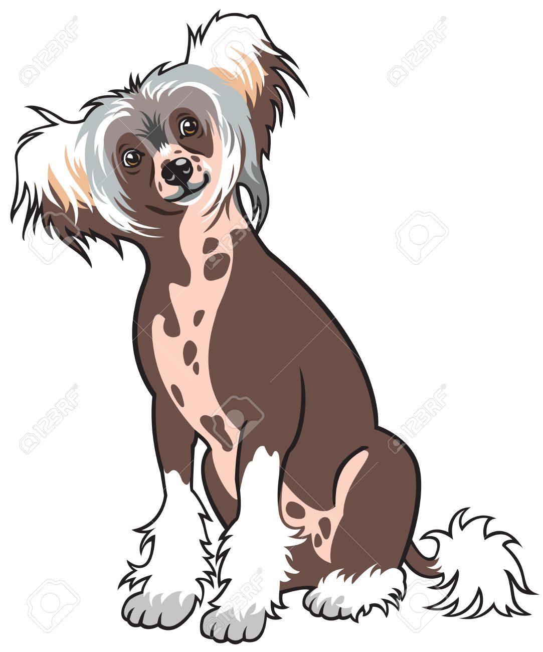 Chinese Crested Dog clipart #13, Download drawings