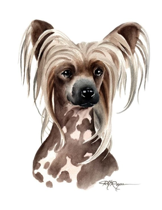 Chinese Crested Dog clipart #14, Download drawings