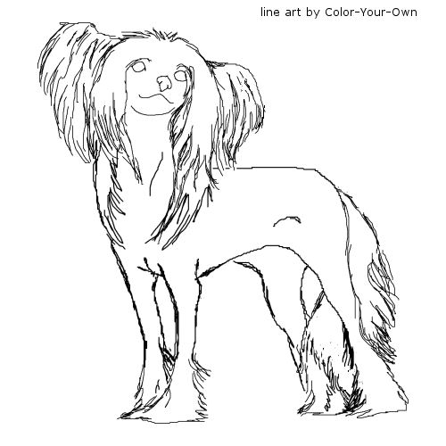 Chinese Crested Dog coloring #2, Download drawings