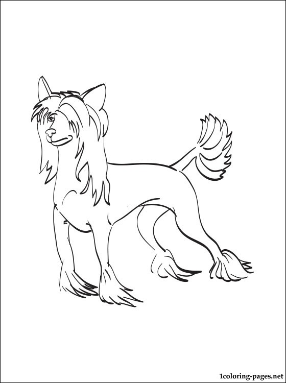 Chinese Crested Dog coloring #12, Download drawings