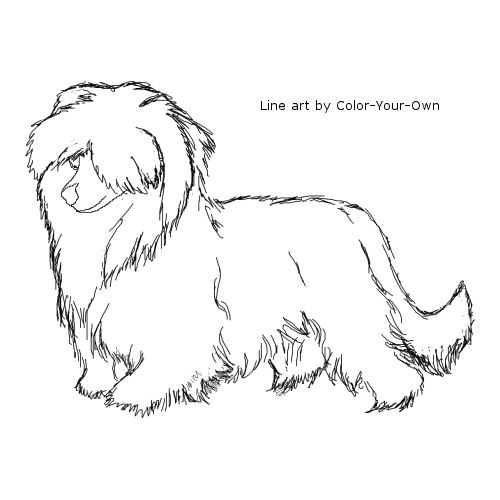 Chinese Crested Dog coloring #3, Download drawings