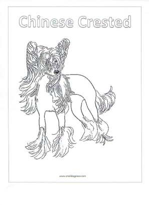Chinese Crested Dog coloring #4, Download drawings
