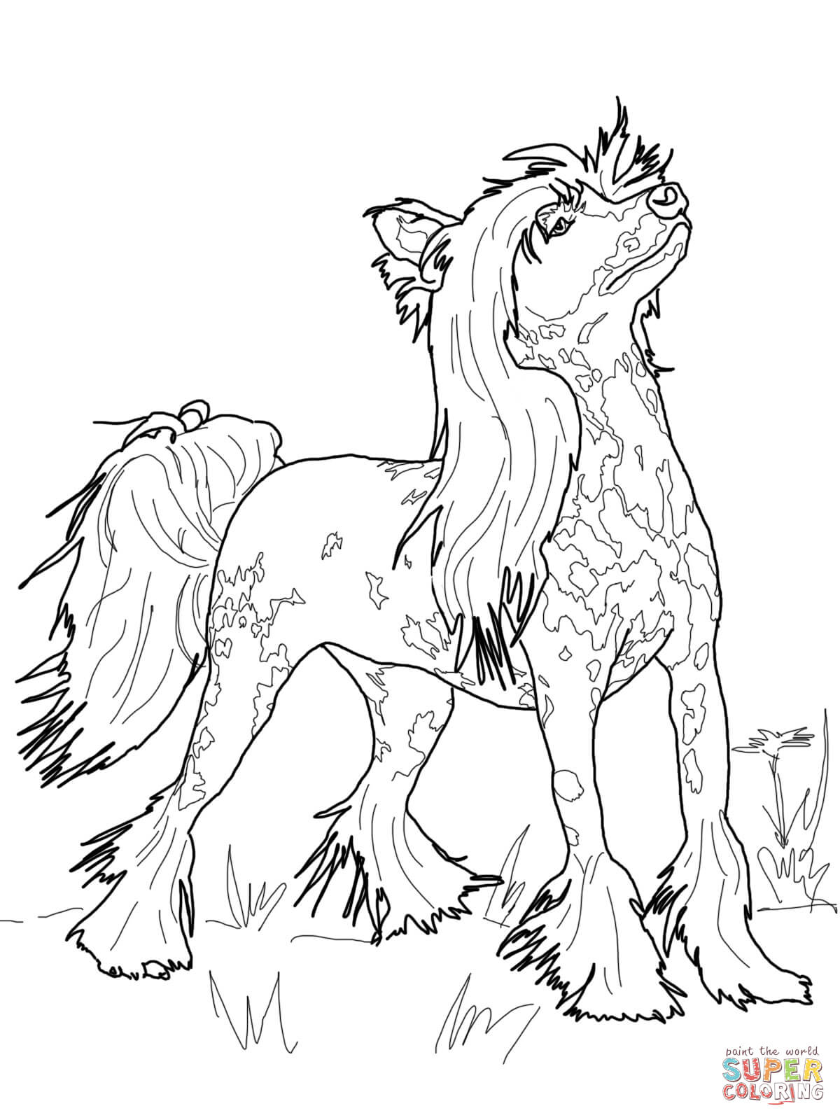 Chinese Crested Dog coloring #10, Download drawings