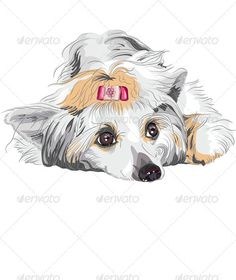 Chinese Crested Dog svg #13, Download drawings