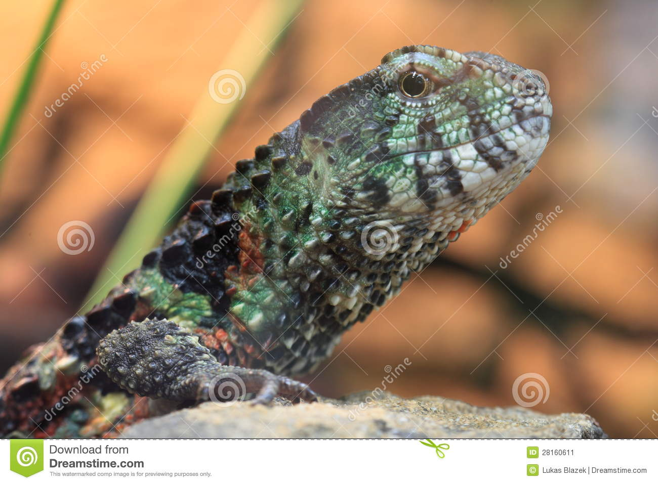 Chinese Crocodile Lizard clipart #17, Download drawings