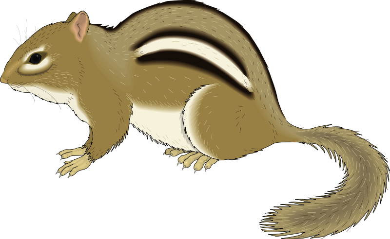 Chipmunk clipart #9, Download drawings
