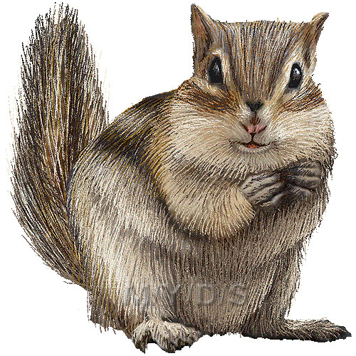 Chipmunk clipart #5, Download drawings