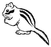 Chipmunk coloring #16, Download drawings