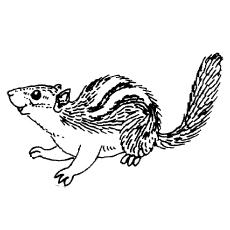 Chipmunk coloring #18, Download drawings