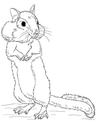 Chipmunk coloring #10, Download drawings