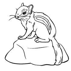 Chipmunk coloring #14, Download drawings