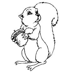 Chipmunk coloring #20, Download drawings