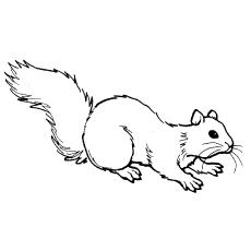 Chipmunk coloring #9, Download drawings