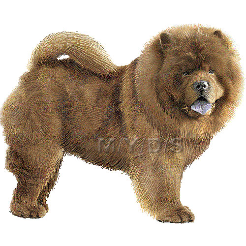 Chow Chow clipart #5, Download drawings