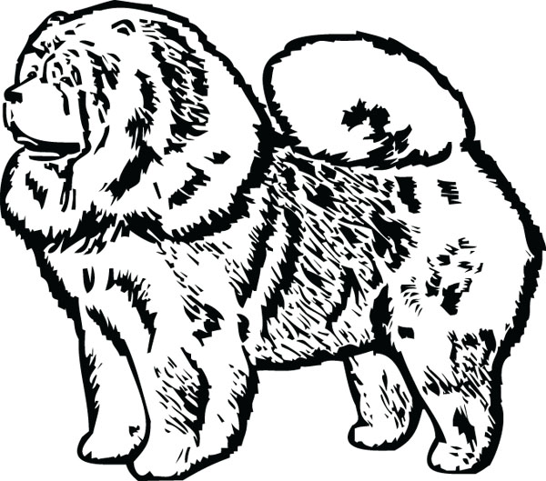 Chow Chow clipart #4, Download drawings