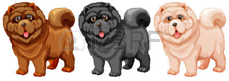 Chow Chow clipart #19, Download drawings
