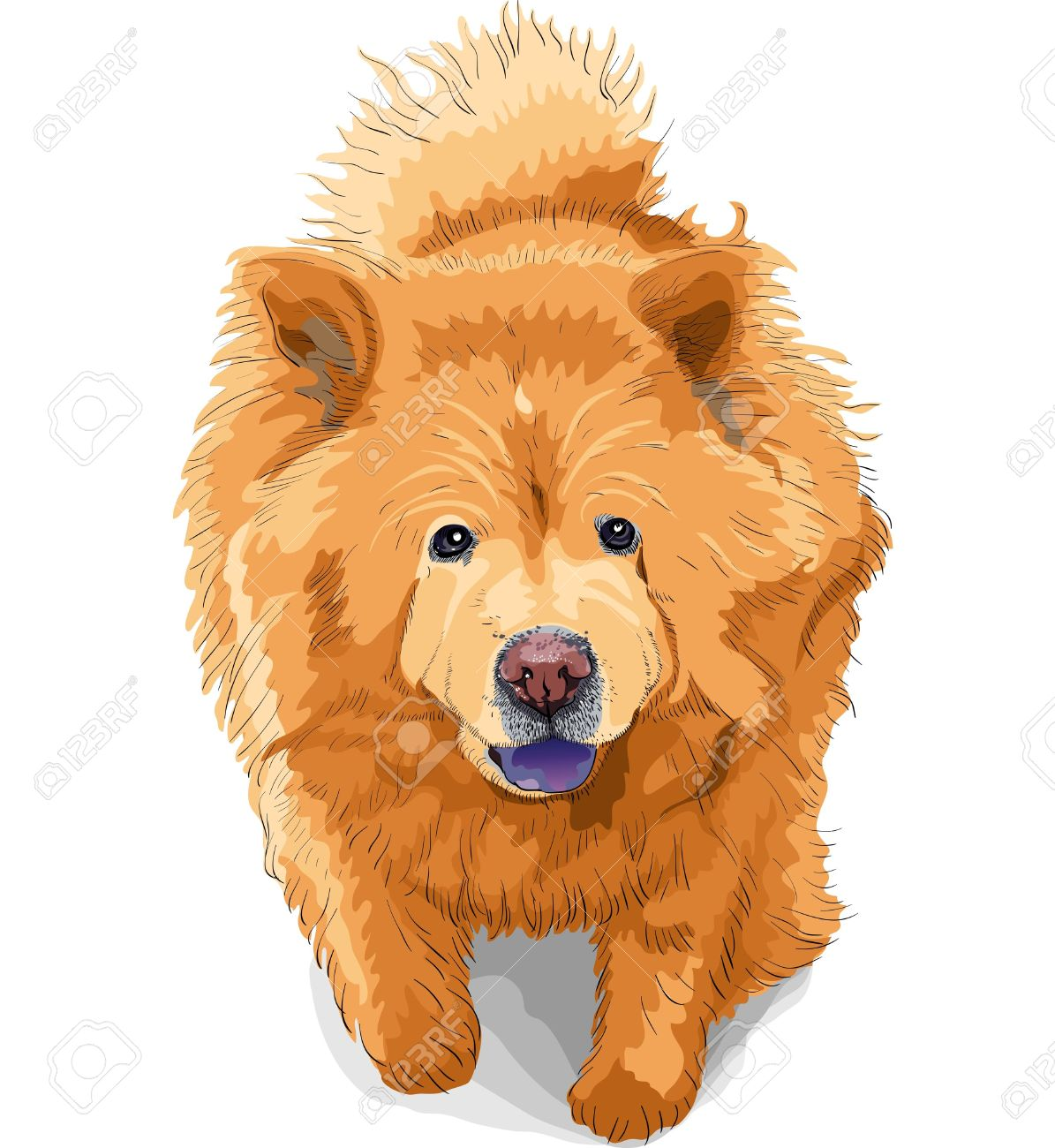 Chow Chow clipart #18, Download drawings