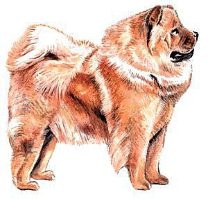 Chow Chow clipart #10, Download drawings